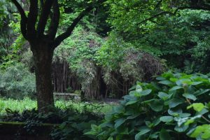 011-giardino nel chiostro